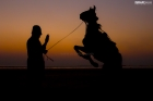 Horse following commands of its master Silhouette