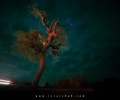 The lonely tree at Princess of Hope spot near Ormara Balochistan in Pakistan