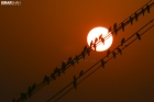 birds-silhouette-on-the-sun