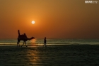 sunset-camel