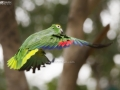 The Amazon Parrot Frozen in the Air