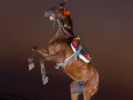 horse-action